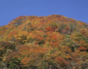 紅葉の山 新潟県の写真素材 [FYI03849859]