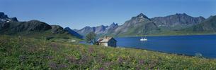 原生花とフィヨルド 北ノルウェー ノルウェーの写真素材 [FYI03850356]