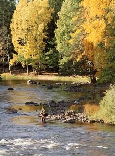 秋の釣り人の写真素材 [FYI03850363]