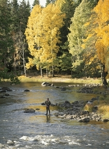 川で釣りをする人物の写真素材 [FYI03850364]