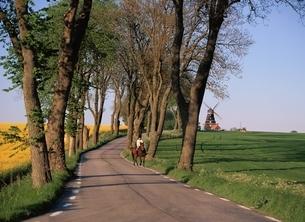 菜の花シーズンの田園の並木道 スコーネ地方 スウェーデンの写真素材 [FYI03850365]