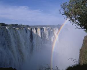 ビクトリア滝にかかる虹 ジンバブエの写真素材 [FYI03850427]