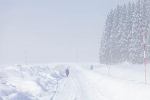 冬の朝の雪原と圧雪路と除雪用路肩目印の写真素材 [FYI03850674]