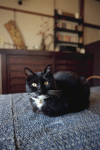 黒猫の写真素材 [FYI03850783]