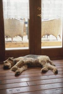 窓辺で眠る犬の写真素材 [FYI03850788]