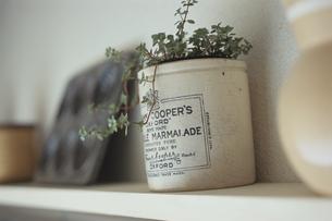 マーマレードの瓶の鉢植えの写真素材 [FYI03850799]