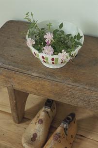 靴の木型と器に活けた植物の写真素材 [FYI03850845]