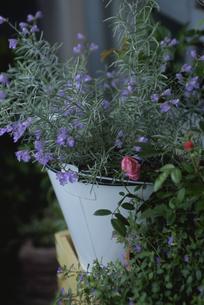 バケツに生けた花の写真素材 [FYI03850869]