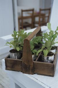 缶に植えられた植物の写真素材 [FYI03850920]