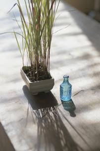葉の長い植物とガラス瓶の写真素材 [FYI03850921]