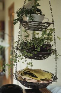 吊るされる鉢に入った植物の写真素材 [FYI03850925]