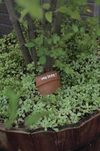 花壇に埋められた鉢の写真素材 [FYI03850929]