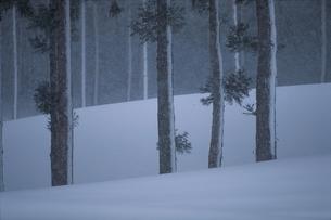 雪吹く森の写真素材 [FYI03851391]