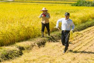 収穫の写真素材 [FYI03851754]