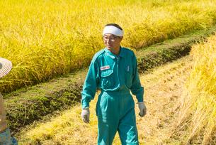 収穫の写真素材 [FYI03851851]
