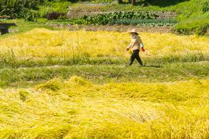 収穫の写真素材 [FYI03851865]