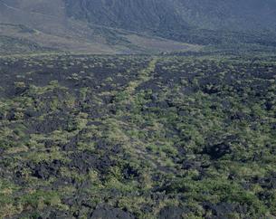 三原山と溶岩地帯  大島 伊豆七島の写真素材 [FYI03851963]