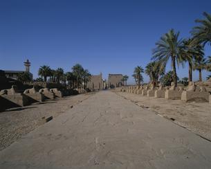 ルクソール神殿へ続くスフィンクス街道  エジプトの写真素材 [FYI03852895]
