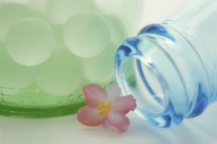 瓶と花(ベコニア)の写真素材 [FYI03852941]