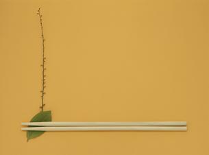 葉の箸起きと箸の写真素材 [FYI03853037]
