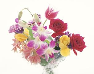 盛花の写真素材 [FYI03853125]