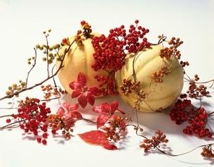 秋の色の写真素材 [FYI03853148]