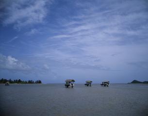 水牛車 海渡り  美原 西表島 沖縄県の写真素材 [FYI03853171]