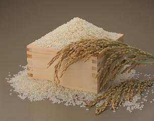 ますに入った山盛りの米とイネの写真素材 [FYI03853186]