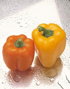 水滴のついた2個のピーマン(黄色・オレンジ)の写真素材 [FYI03853239]