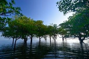 朝の西表島の写真素材 [FYI03853796]