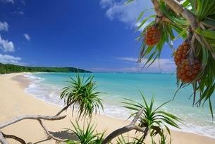 宮古島の海岸の写真素材 [FYI03853921]
