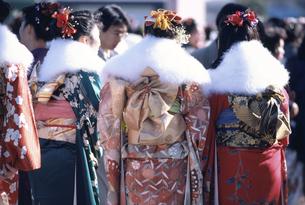 成人式にて振袖を着た日本人女性の後姿の写真素材 [FYI03854123]