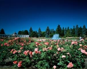 フローラル・ガーデン ナイアガラフォール  カナダの写真素材 [FYI03854548]
