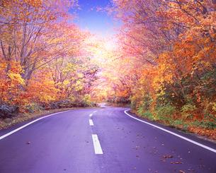 ブナ林と道の写真素材 [FYI03855106]