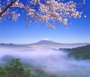 富士山と桜の写真素材 [FYI03855109]
