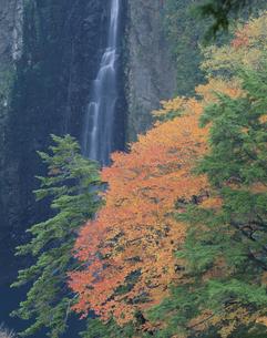 震動ノ滝と紅葉  九重町 大分県の写真素材 [FYI03855531]