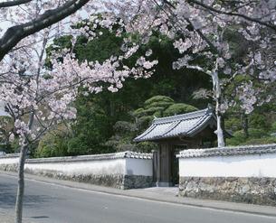 桜と歴史と文学の道  佐伯市 大分県の写真素材 [FYI03855550]