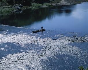 大野川 おちアユ漁  犬飼町 大分県の写真素材 [FYI03855552]