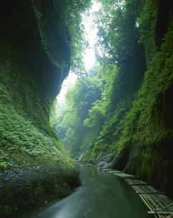 新緑の由布川渓谷 谷ケ淵  狭間町 大分県の写真素材 [FYI03855565]