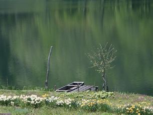 新緑に覆われた中鋼湖 長野県の写真素材 [FYI03856067]