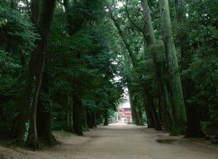 林の参道の写真素材 [FYI03856111]