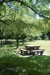 緑に囲まれた公園のベンチの写真素材 [FYI03856190]