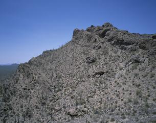 ツーソン・マウンテン・カントリー・パーク  アリゾナ州の写真素材 [FYI03856803]