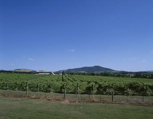ぶどう畑 ヤラバレー    オーストラリアの写真素材 [FYI03856997]