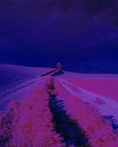 丘の草原の写真素材 [FYI03857281]
