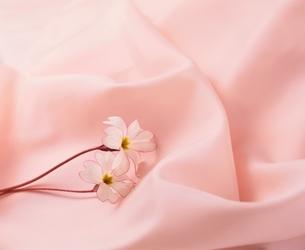 ピンク色の布の上の花の写真素材 [FYI03857287]