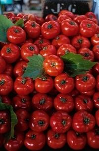 トマトの写真素材 [FYI03857425]