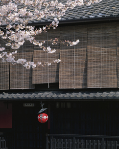 桜と町家  祇園巽橋付近 京都府の写真素材 [FYI03857671]