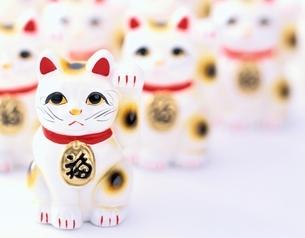 招き猫の写真素材 [FYI03858621]