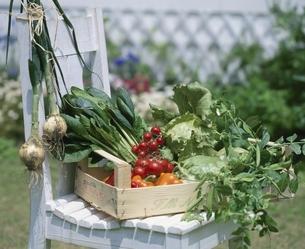 椅子に載せられた木箱に入った多種の野菜の写真素材 [FYI03858694]